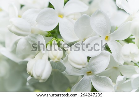 Macro image of spring lilac white flowers, floral background - stock photo