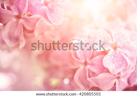 Macro image of spring soft violet  lilac flowers with water drops, natural seasonal sunny floral background. Can be used as holiday card with copy space. - stock photo