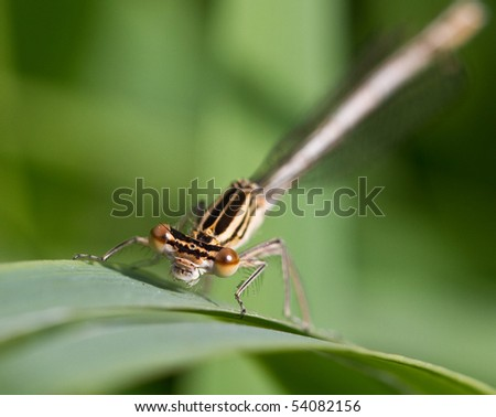 Macro image of the face of a damsel fly staring directly at the camera with shallow depth of field