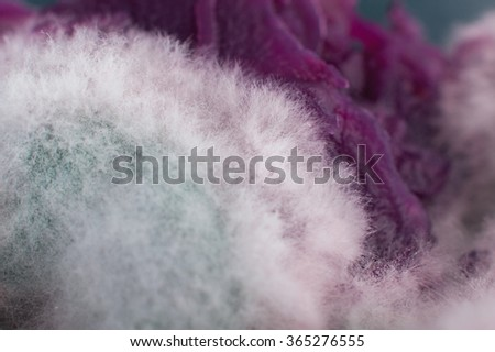 Macro landscapes with mold. Abstract alien dream world. - stock photo