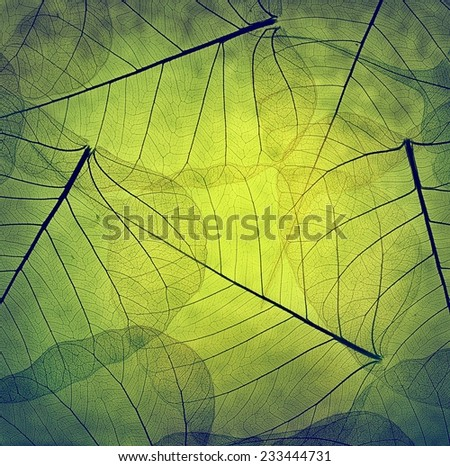 Macro leaves background texture - stock photo