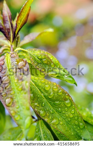macro leaves photography after rain.  - stock photo