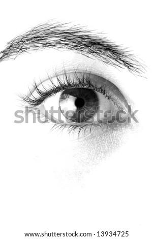 Macro of a beautiful eye - stock photo