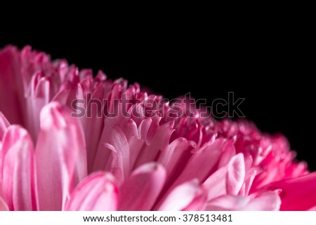 macro of a class 8 Anemone Chrysanthemum flower spray painted to add a variety of color - stock photo