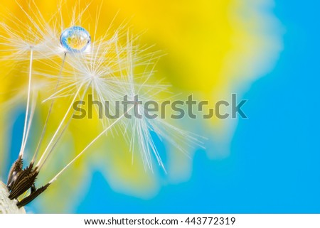 Macro of a dew drop in dandelion seeds with flower relfection - stock photo