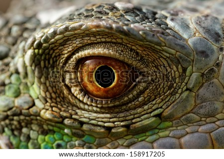 macro of a fantastic green iguana eye - stock photo