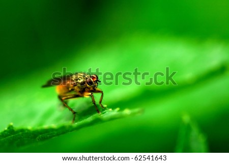 Macro of a fly resting on leaf