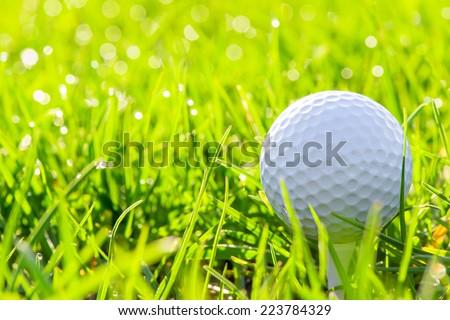 macro of a golf ball in green grass - stock photo