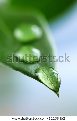 Macro of a green leaf with water drops - stock photo