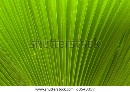 Macro of a green palm leaf with diagonal pattern and dew drops