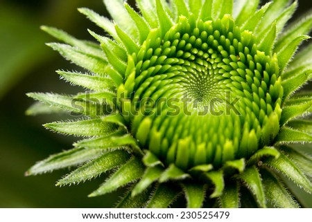 Macro of a green plant - stock photo