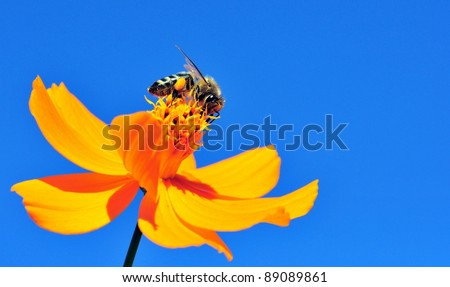 Macro Of A Honey Bee Pollinating A Flower Against Blue Sky - stock photo