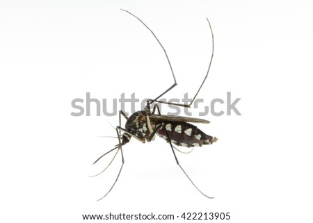 macro of a Mosquito on a white background - stock photo