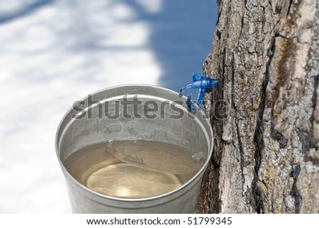 Macro of a new tap and bucket used for collecting maple sap in the early spring. - stock photo