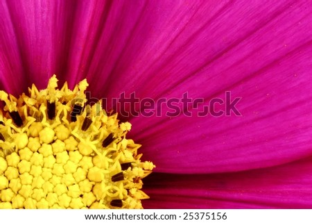 macro of a purple flower - stock photo