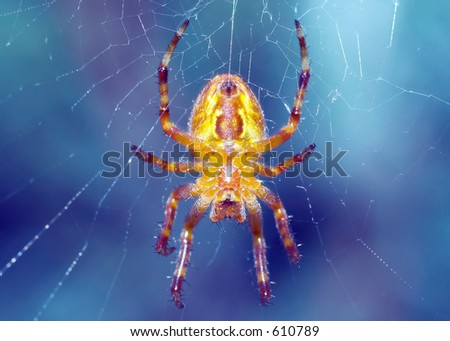 Macro of a Spider with web visible - stock photo