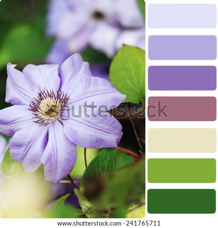 Macro of a violet clematis with color palette.  - stock photo