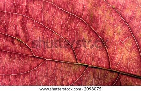Macro of an Autumn Leaf - Great detail