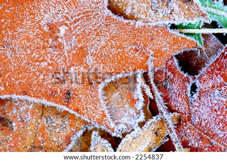 Macro of autumn leaves on the ground covered with morning frost