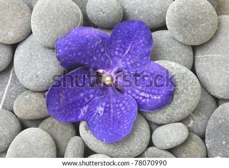 Macro of beautiful blue orchid on gray pebble background