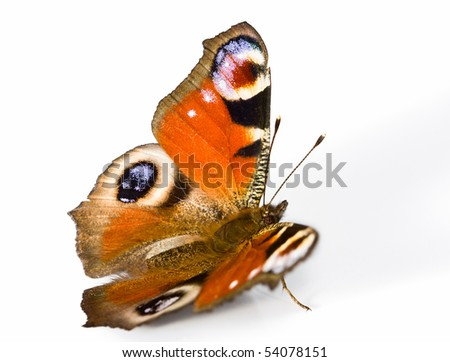 macro of butterfly isolated on white background - stock photo