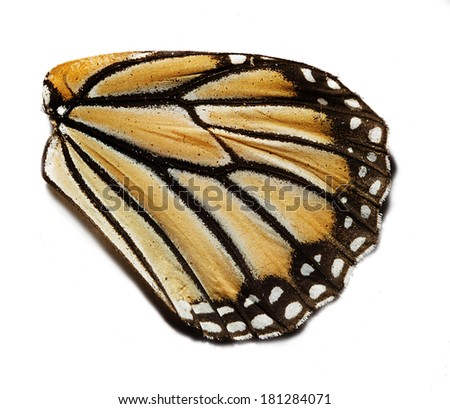 Macro of butterfly wing - stock photo