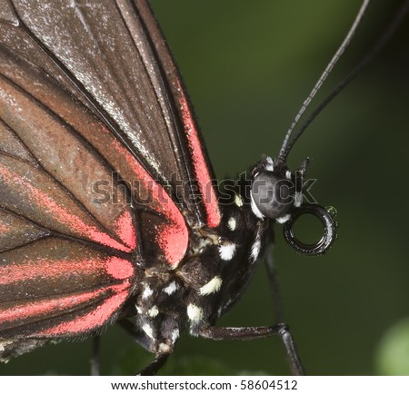Macro of Butterfly with Red wings and green background - stock photo