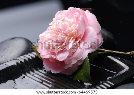 macro of camellia flower with therapy stones - stock photo
