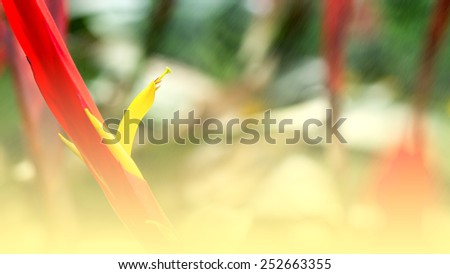 Macro of colorful Bromeliad blossom in the park - Color filter style pictures