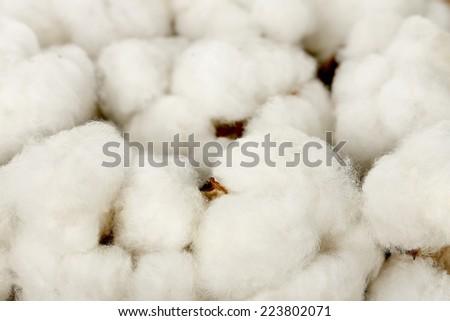 macro of cotton balls  - stock photo