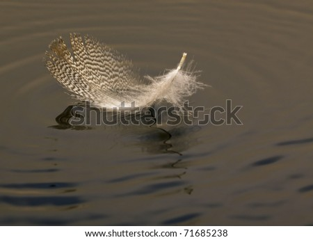Macro of feather on water brown ripple floating - stock photo