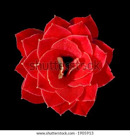 Macro of flower - stock photo
