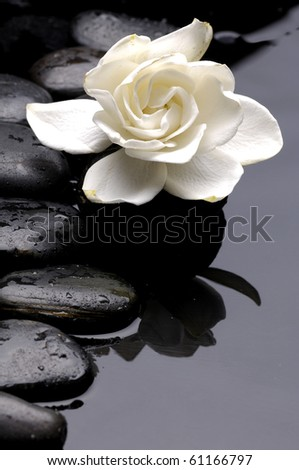 macro of Gardenia flowers on pebble - stock photo