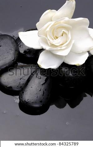 Macro of gardenia flowers with zen stones - stock photo