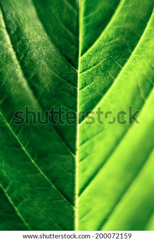 Macro of green Cannabis leaf. - stock photo