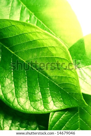 macro of green leaves - stock photo