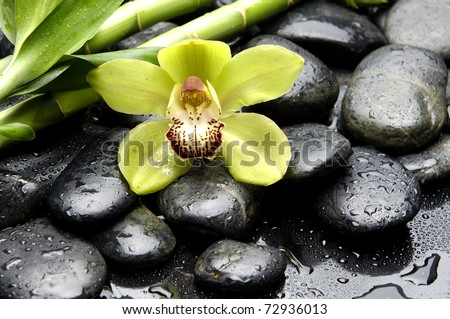 Macro of green orchid and green palm leaf on wet pebble - stock photo