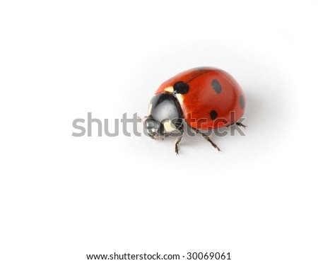 Macro of Ladybird.Studio isolated