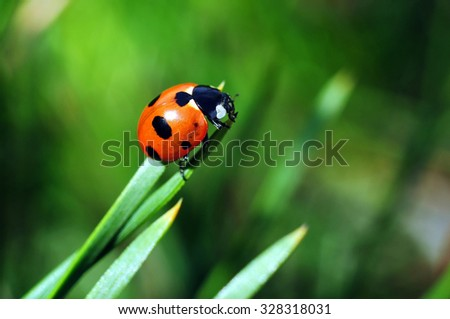 Macro of ladybug on a blade of grass in the morning sun - stock photo