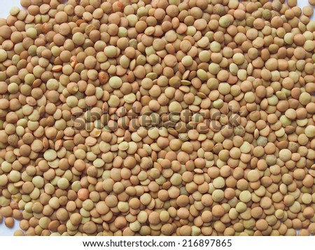 macro of Lentil pulse nuts (Lens culinaris) - stock photo