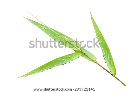 Macro of long grass blades, isolated on white background.