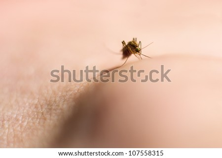 Macro of mosquito on human ankle - stock photo