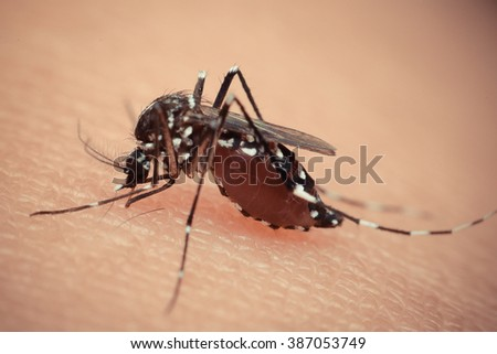 Macro of mosquito sucking blood close up on the human skin. Mosquito is carrier of Malaria, Encephalitis, Dengue and Zika virus , process in vintage style - stock photo