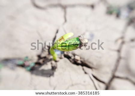Macro of one bean germ and shoot with first green leaves over soil break background