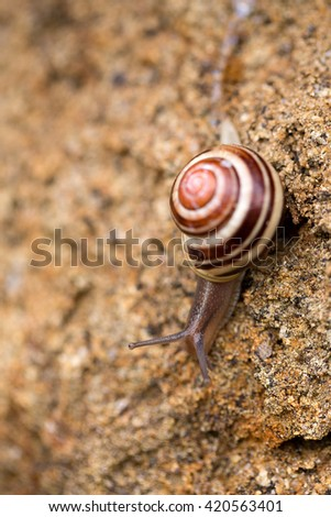 macro of one small garden snail on ground with stripped brown house.  - stock photo