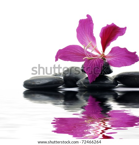 macro of or beautiful flower with therapy stones -reflection - stock photo