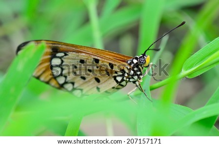 macro of orange butterfly hanging on green leaf ; selective focus at eye  with blur foreground and background - stock photo