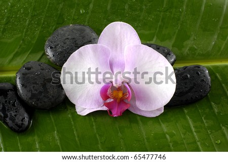 Macro of orchid and black stones on banana leaf background