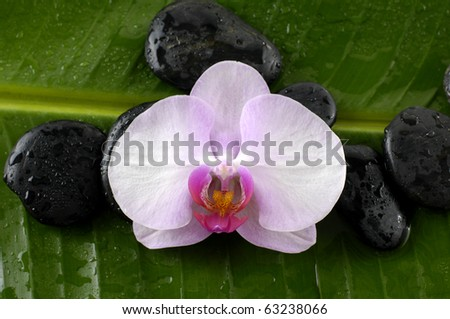 Macro of orchid and stones on banana leaf
