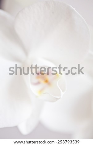 Macro of orchid in bloom - stock photo